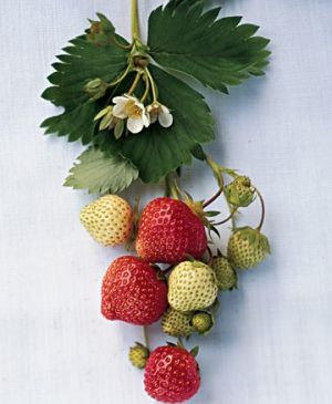 IMAGES Wednesday Weight blog series - A healthy life - strawberry.jpg