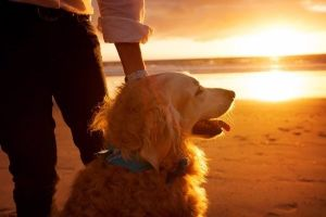 Inspiration for a healthy life - Take your dog to the beach for a sunset walk.jpg