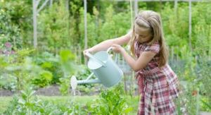 PICTURES Wednesday Weight blog series - A healthy life - Organic gardening photos.jpg
