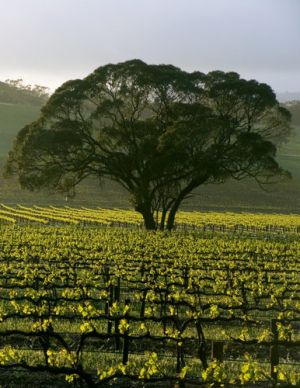 Pictures of the Barossa Valley.jpg