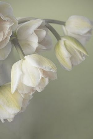 Floral fancy - mylusciouslife.com - romantic white flower.jpg