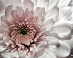Floral fancy - mylusciouslife.com - romantic white flower2.jpg