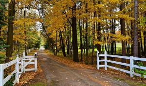 Driveways and entrances - www.myLusciousLife.com - Tree-Lined-Driveway-to-Home.jpg