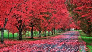 Driveways and entrances - www.myLusciousLife.com - tree-lined-driveway-in-washington.jpg