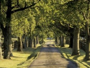 Driveways and entrances - www.myLusciousLife.com - usa_kentucky_lexington_tree_lined_driveway.jpg