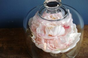 Dome_Etsy bell jar flower - Live lusciously with LUSCIOUS.jpg