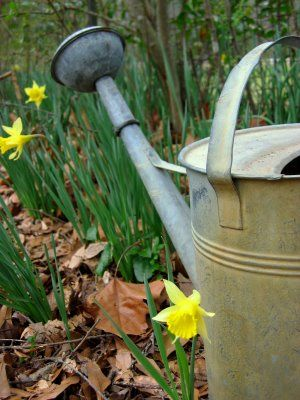 Watering can - Living lusciously.jpg