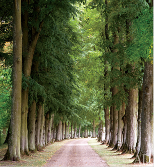 Architectural Digest image of tree-lined driveway.png
