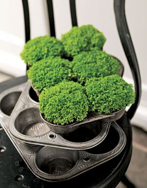 The colour green - Countryliving.com - Babys Tears in Muffin Tins.jpg