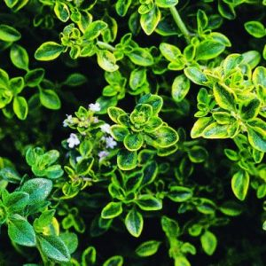 The colour green - myLusciousLife.com -  bright green leaves shrub.jpg