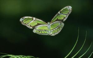 The colour green - myLusciousLife.com - Butterflies.JPG