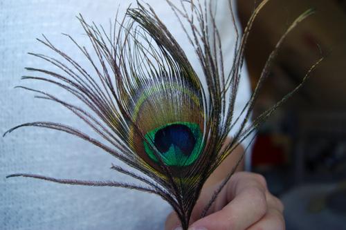Luscious Textures Photos Of Feathers