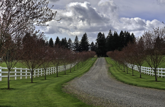 Long Driveway Landscaping Trees